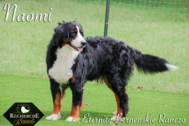 Naomi- Bernese Mountain Dam