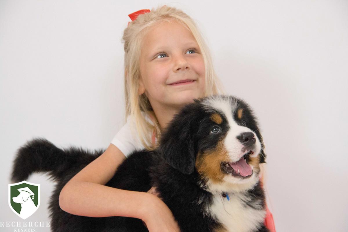 About Recherche Bernes Bernese Mountain Dogs And Bernedoodles