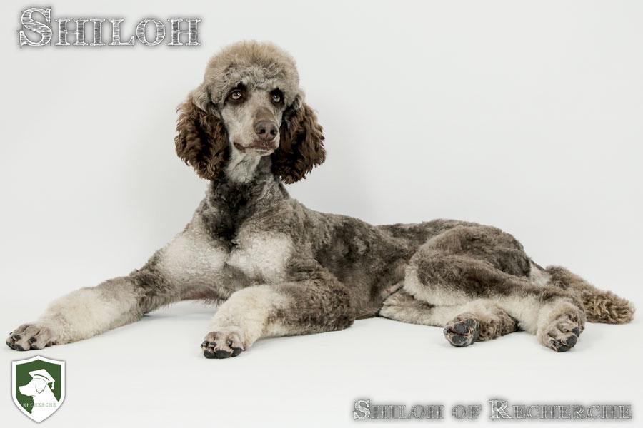 Shiloh-1
