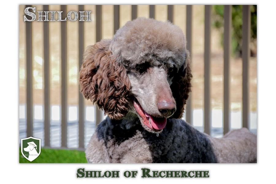 Shiloh-100