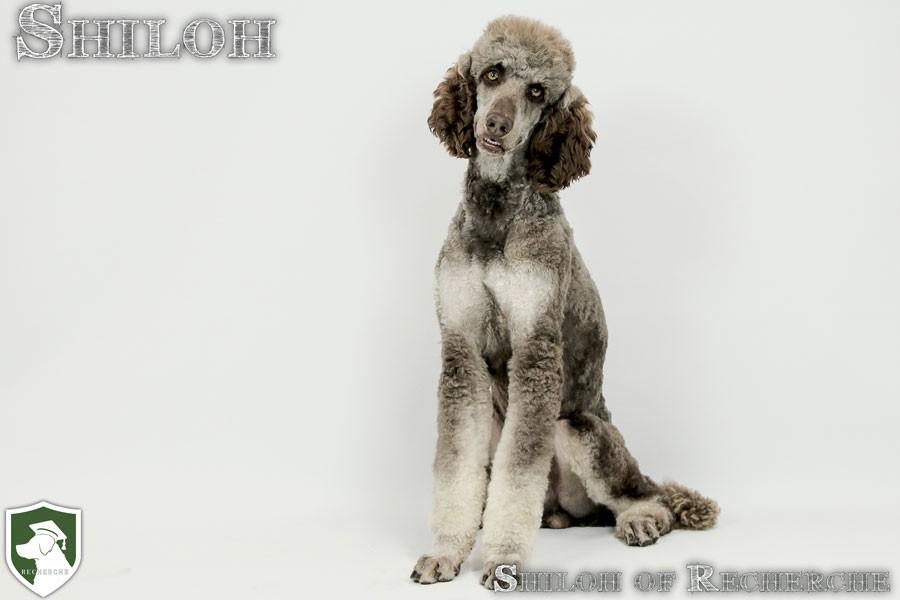 Shiloh-16