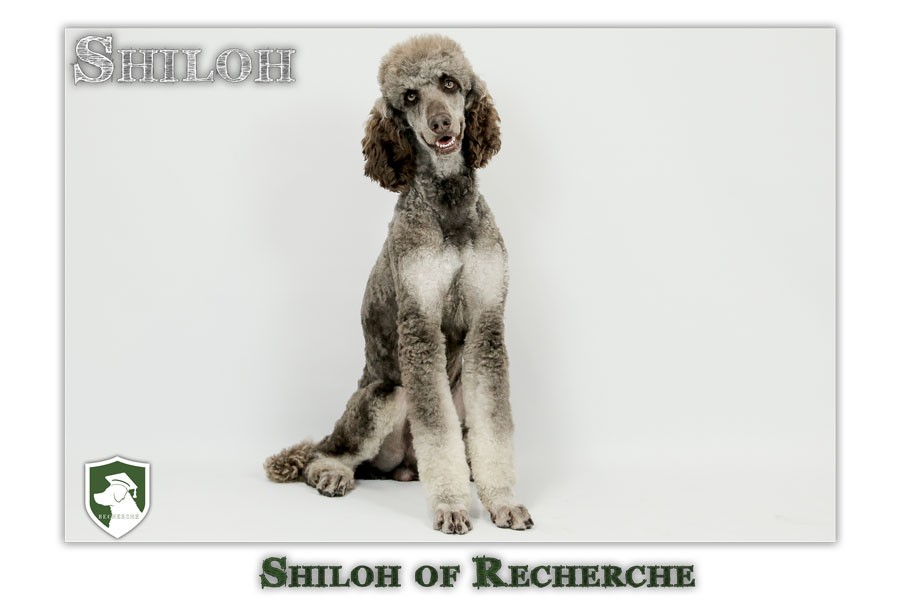 Shiloh-18