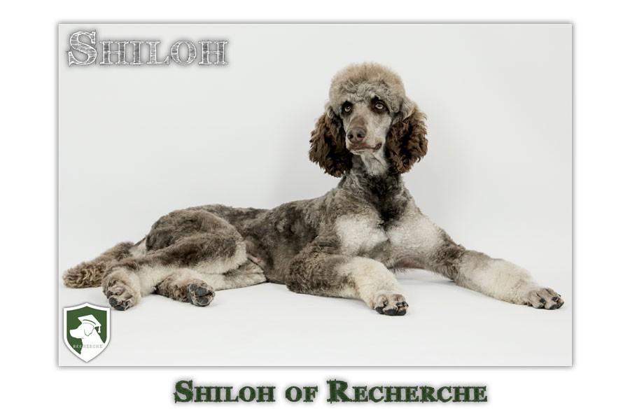 Shiloh-2