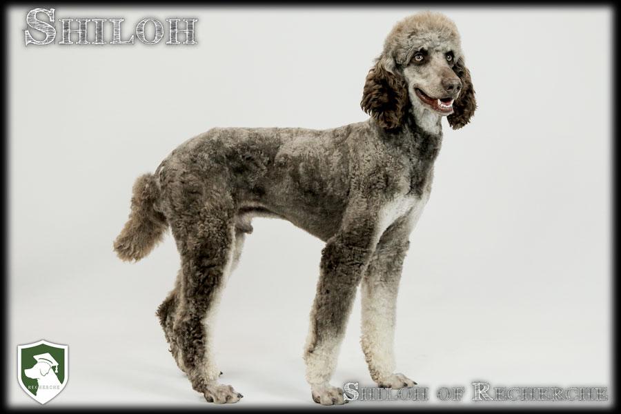Shiloh-34