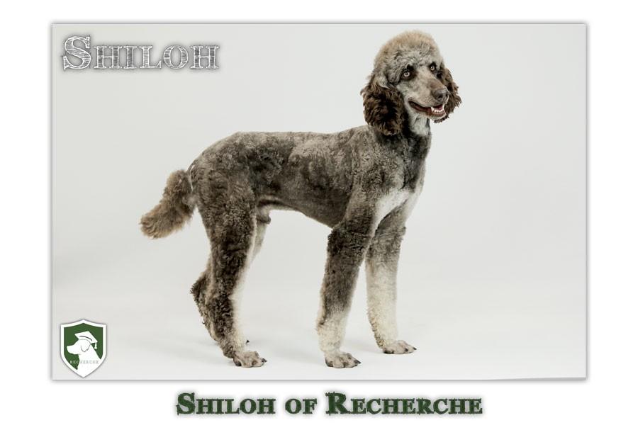 Shiloh-41