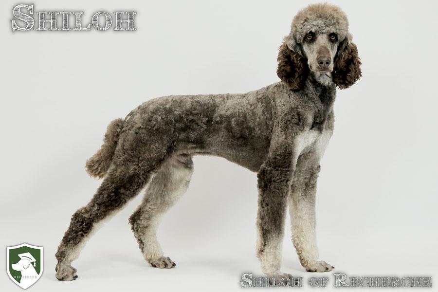 Shiloh-44
