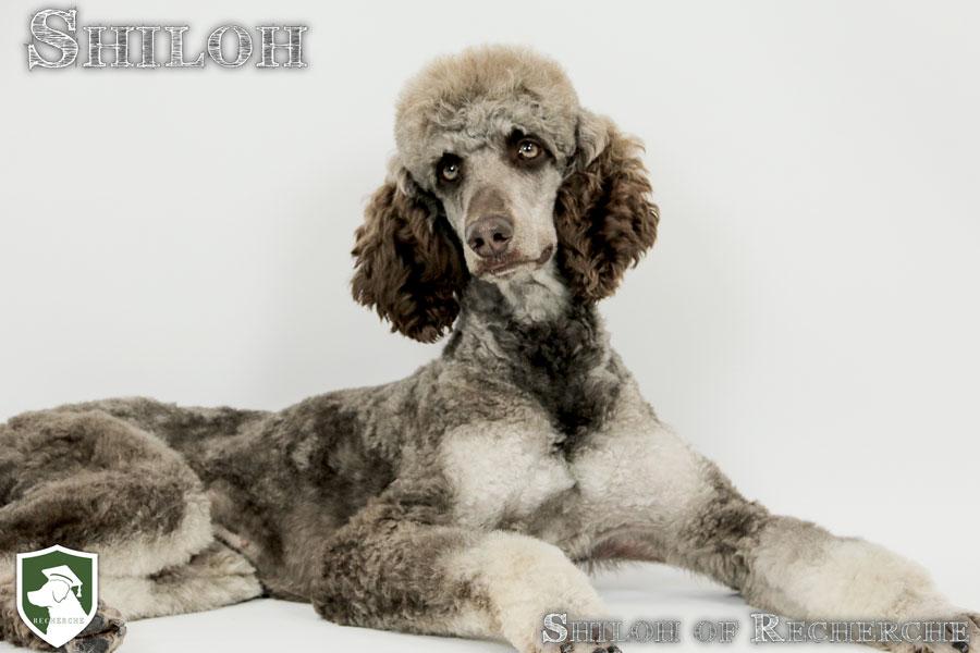 Shiloh-7