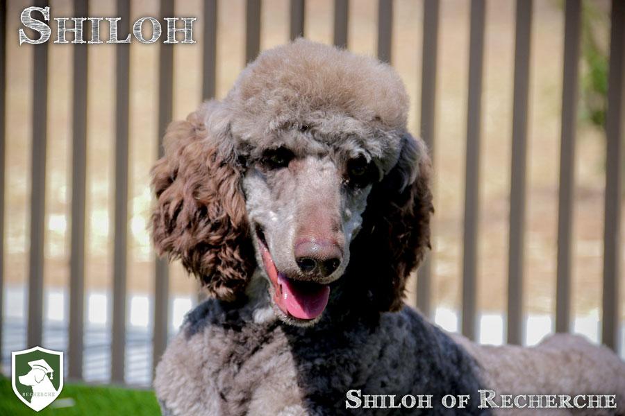 Shiloh-91