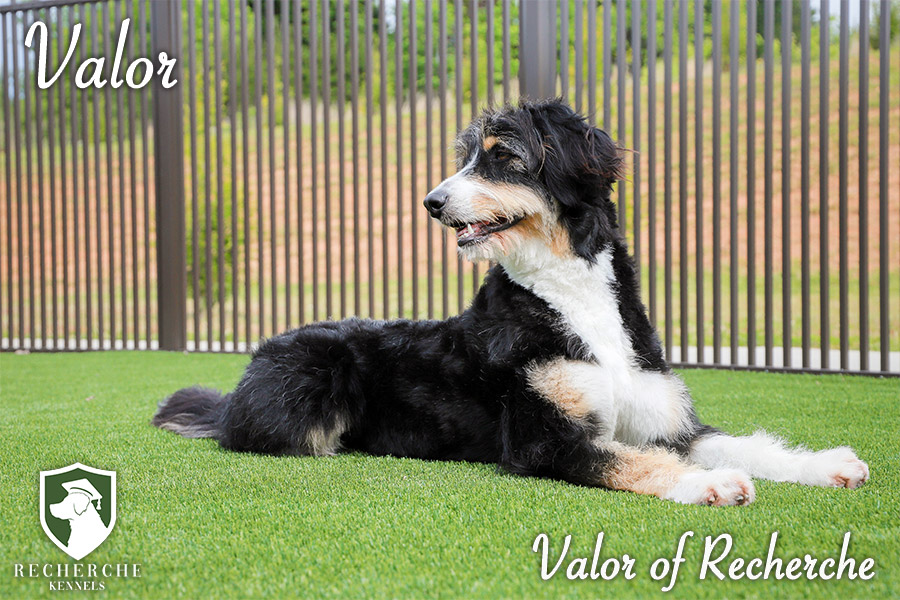 Valor14