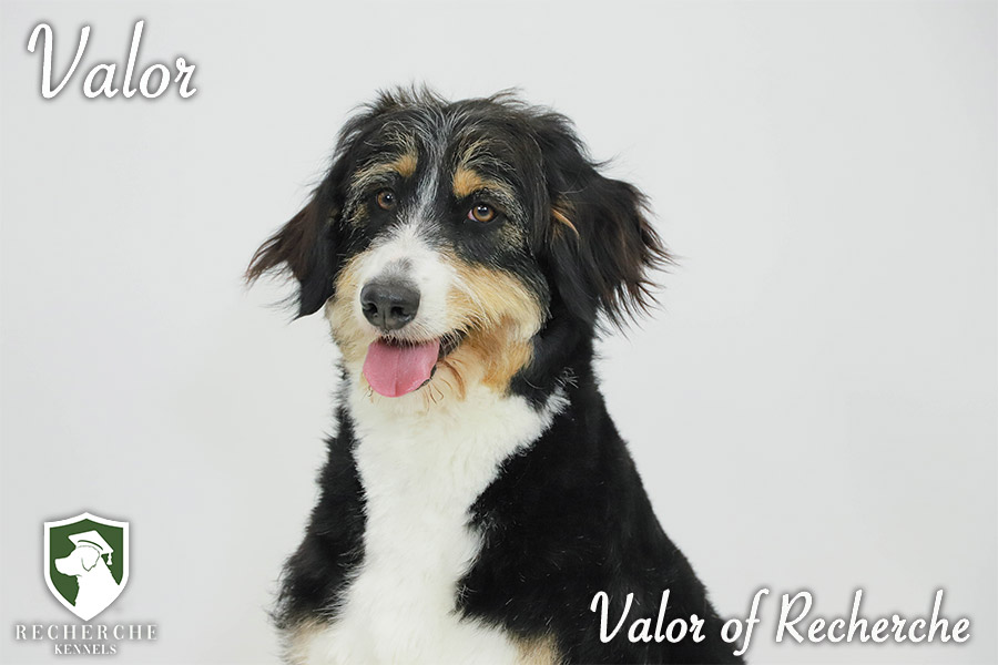 Valor9