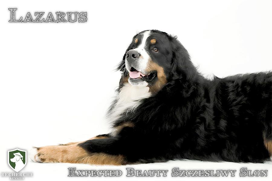 Lazarus5