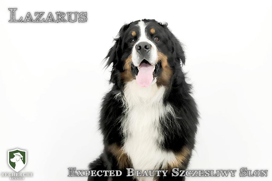 Lazarus6