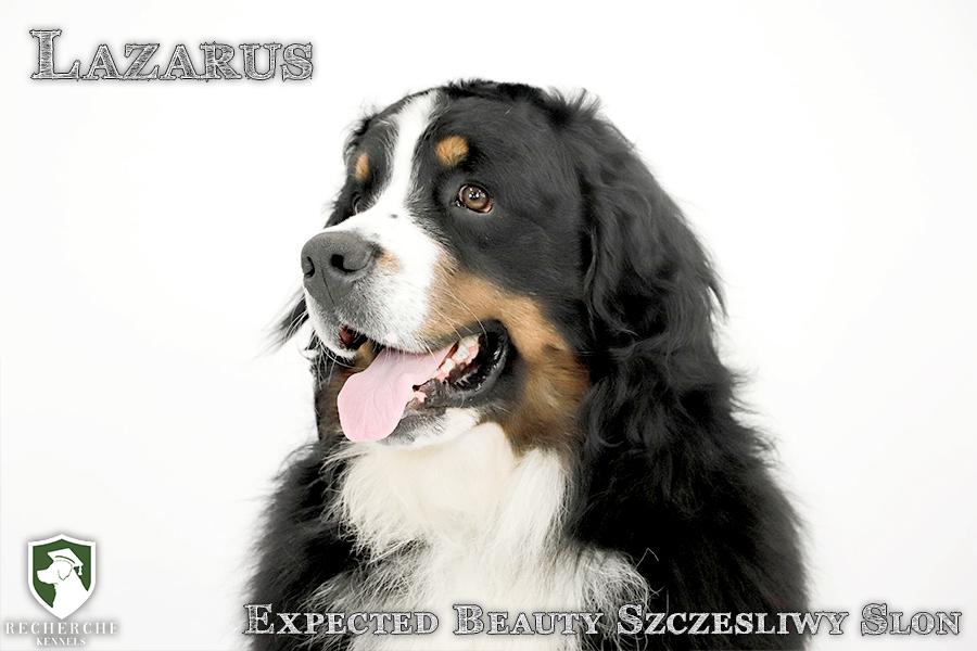 Lazarus8