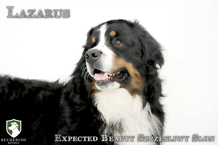 Lazarus9